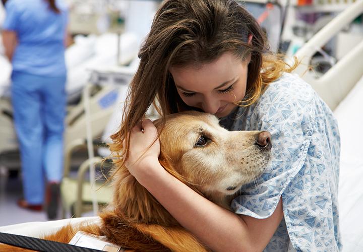 Besuchshund wird von einer Patientin im Krankenhaus umarmt