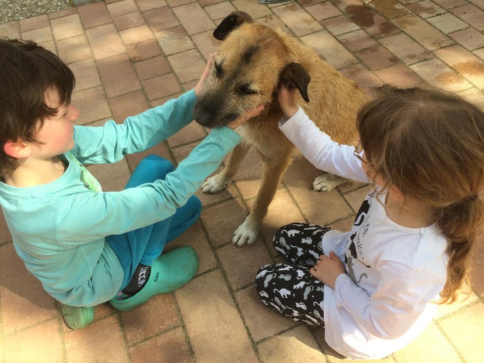 Therapiehund Diggles mit Kindern