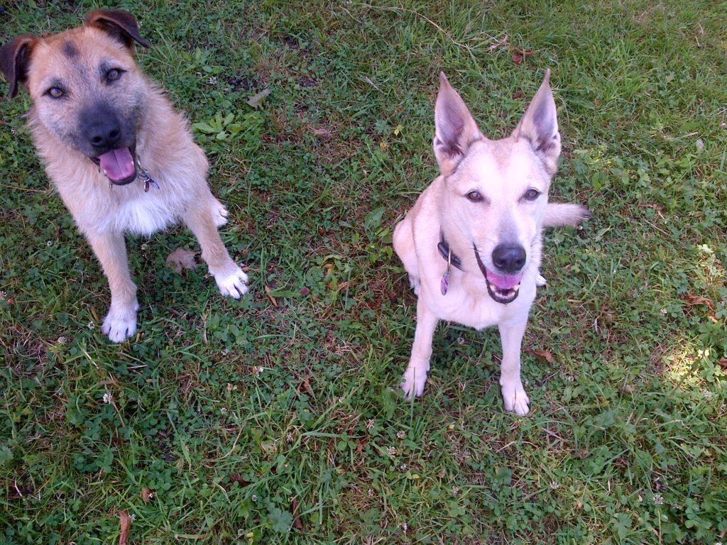 Hunde Diggles & Jara