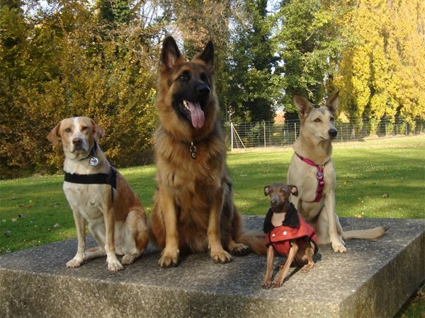 Vier Hunde auf einer Bank