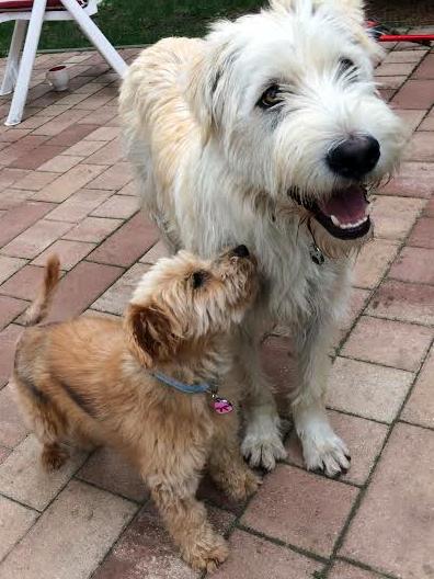 Hunde Rosa und Fritz nahe beinander