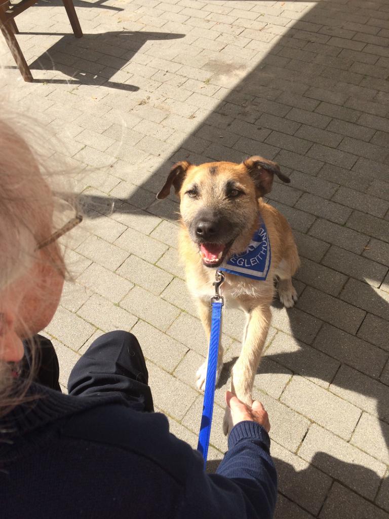 Mischlingshund Diggles gibt einer Pflegeheim-Bewohnerin seine Pfote