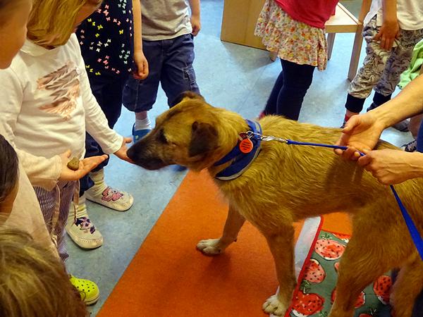 Besuchshund Diggles mit Kita-Kindern