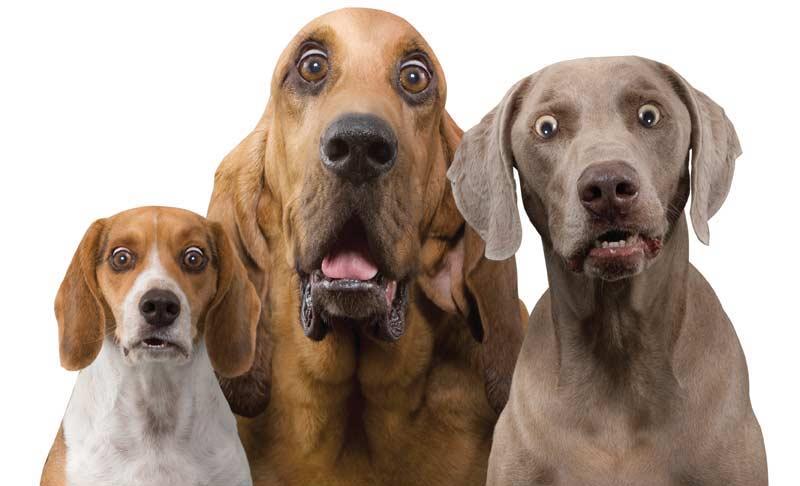 Überraschte Hundegesichter