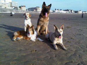 Vier Hunde zusammen am Strand