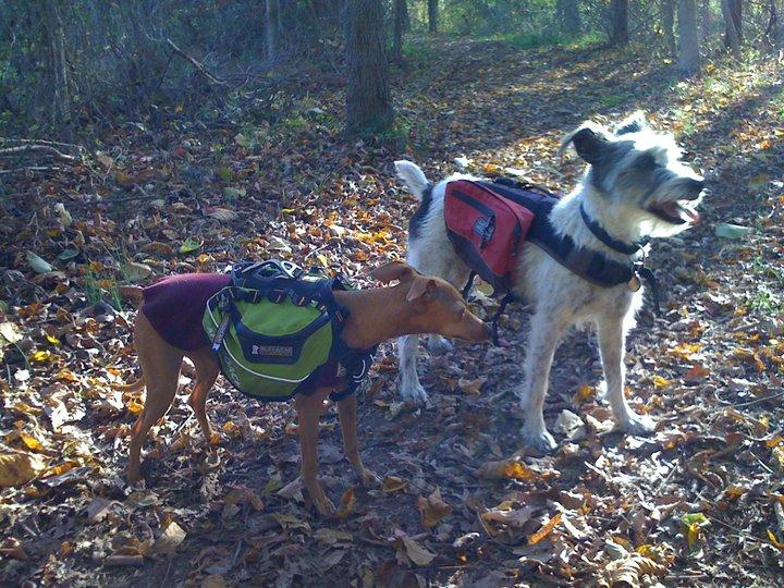 Besuchshunde Tootsie & Jorja im Wald