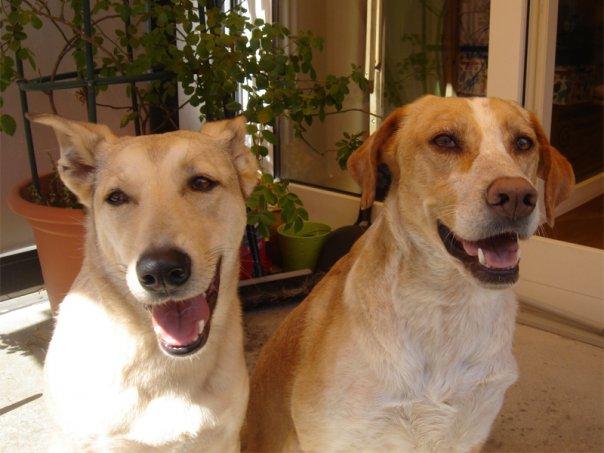 Besuchshunde Jara und Camina auf einem Balkon