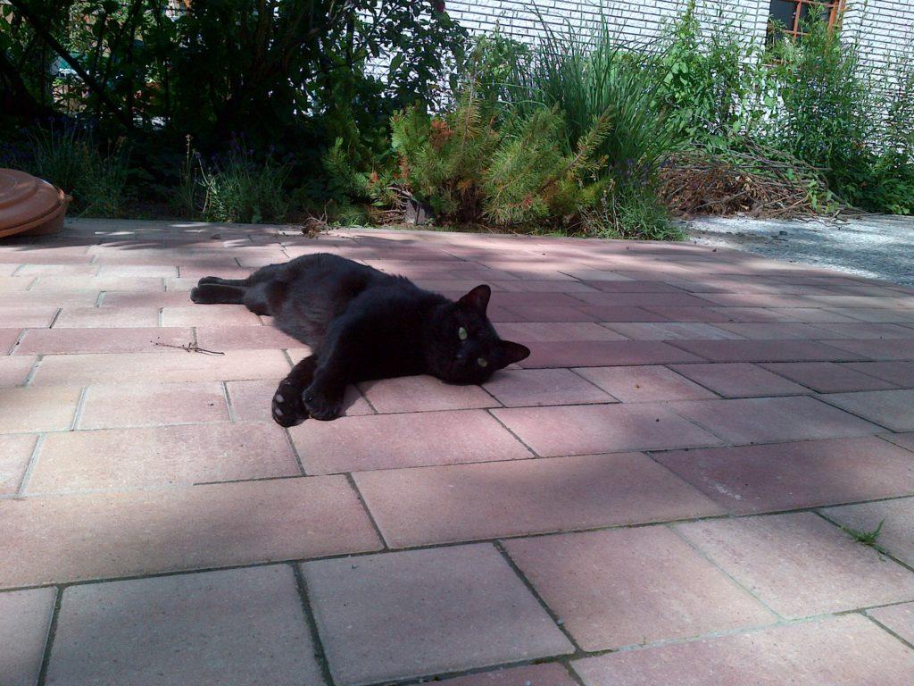 Besuchskatze Morgan auf einer Terrasse liegend