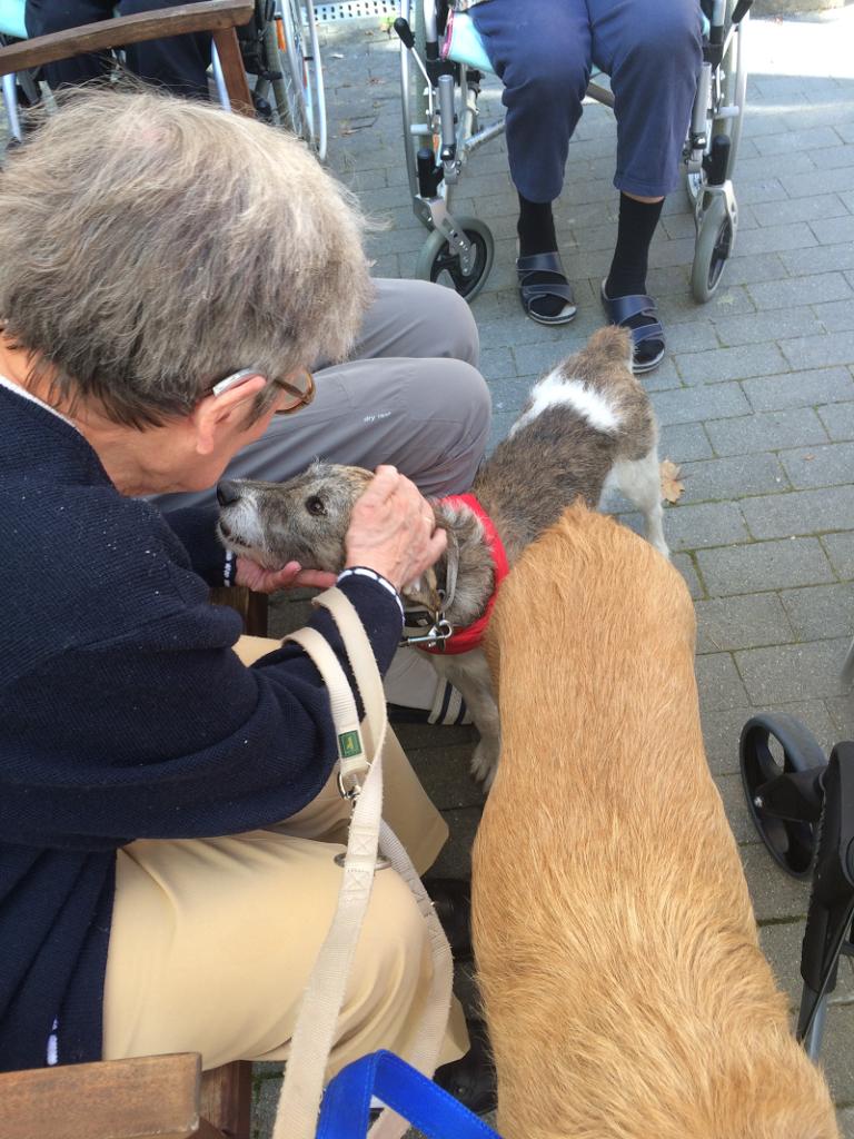 Besuchshund Terriermischling Luca wird von einer älteren Dame im Rollstuhl gekrault