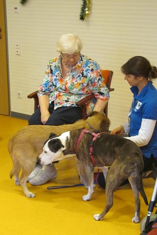 Dogo-Mix Besuchshündin Betsy mit einer Pflegeheim-Bewohnerin