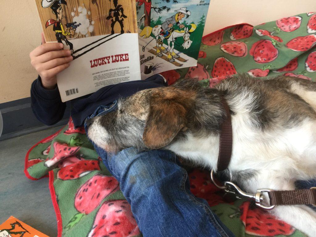 Lesehund Luca, Terriermischling mit Kopf auf Beinen eines lesenden Kindes
